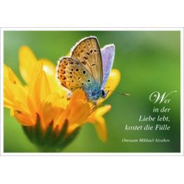 Postkarte - Schmetterling