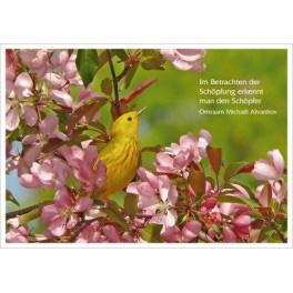 Postkarte - Vogel im Blütenzweig